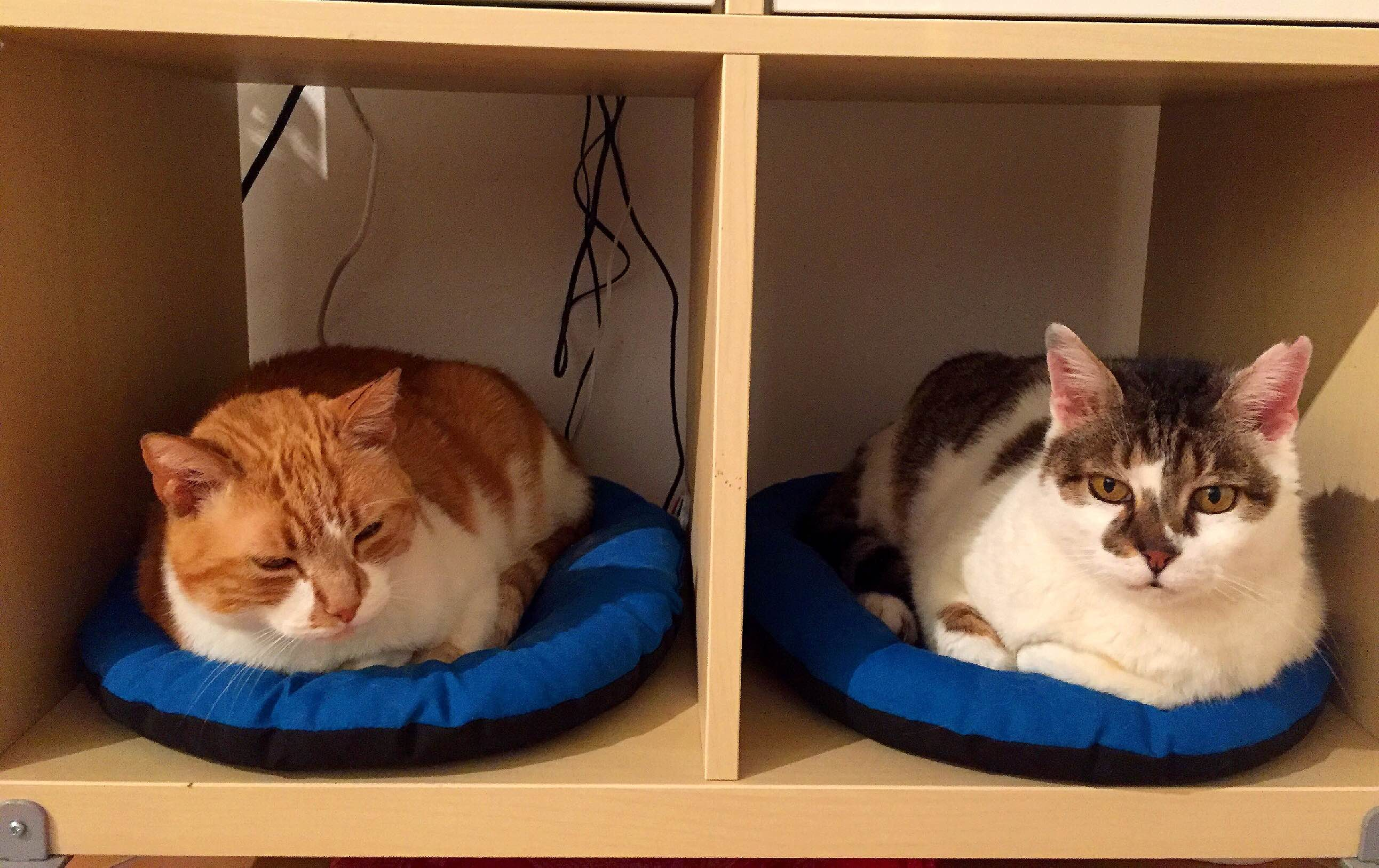 un couffin pour mes chats le blog des 5 filles. Black Bedroom Furniture Sets. Home Design Ideas