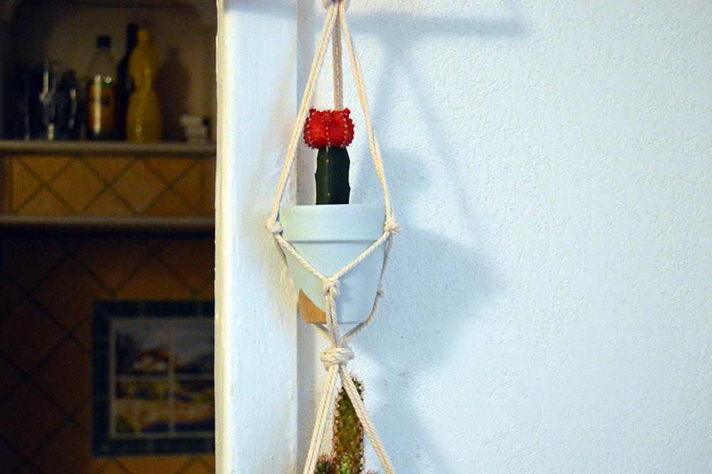 cactus-rouge