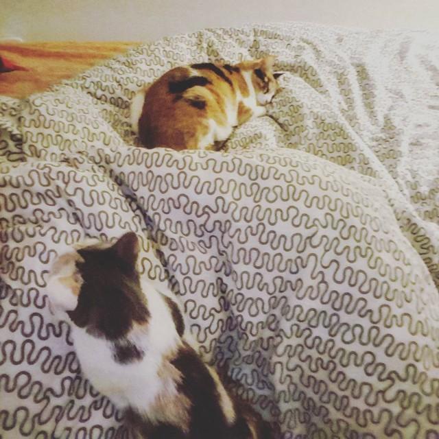 Reveil tout doux cat babycat cute love baby